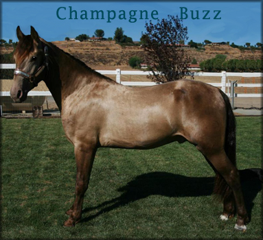 CHAMPAGNE BUZZ #20605524 - click on the photo to load his page.