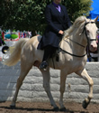 Walk N Express-Specializing in Tennessee Walking Horses